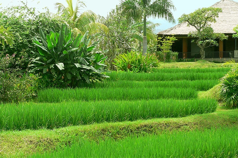 Rice fields Villa Bali Breeze